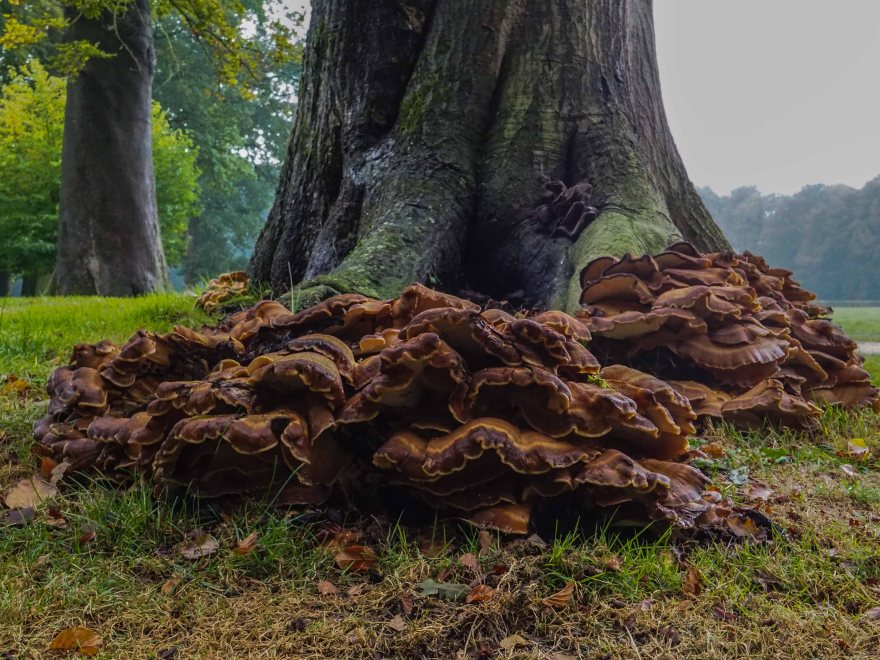 """Fungus in the palace garden"" Olympus OMD-EM10 Olympus Olympus M.Zuiko Digital 9-18mm f/4-5.6 ED"