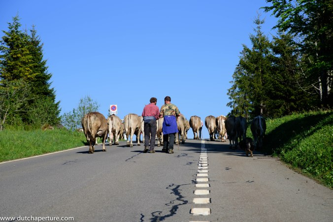 Road Trip Schwyz WP-10