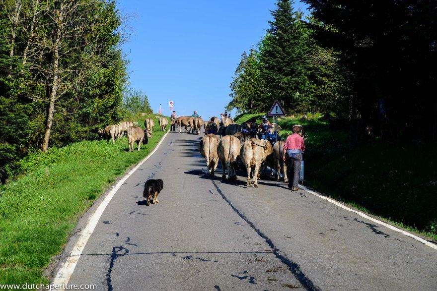 Road Trip Schwyz WP-8
