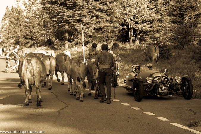 Road Trip Schwyz WP-9