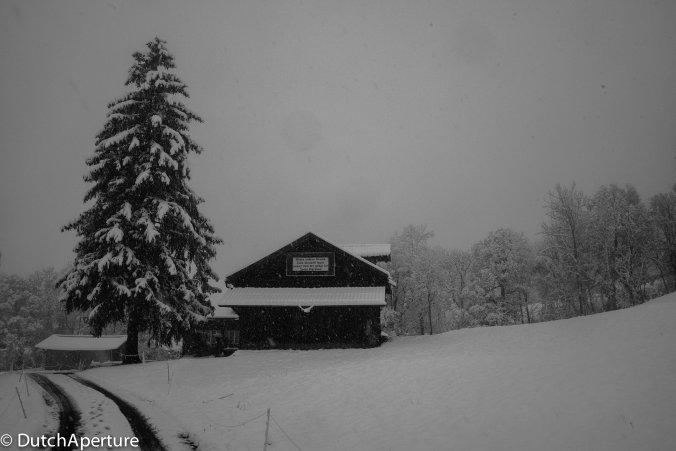Grindelwald-12
