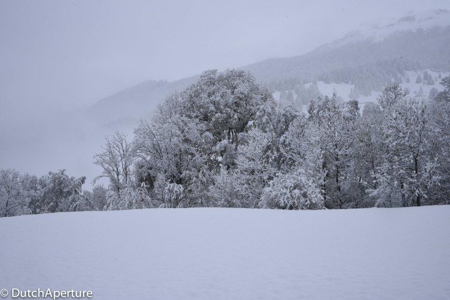 Grindelwald-8
